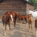 BitterRoot Foal 1
